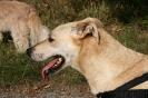Tierschutzwanderung 2014_14