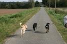 Tierschutzwanderung 2014_4