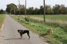 Tierschutzwanderung 2014_5