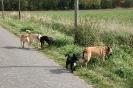 Tierschutzwanderung 2014_6